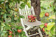 Фотопроект_Яблоневый сад