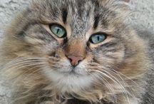 Pisici / Poze interesante cu pisici