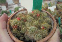 ~succulent garden~