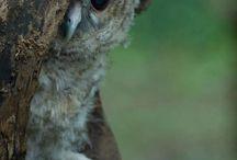 Owl always luv u / by Mary Shortsighted