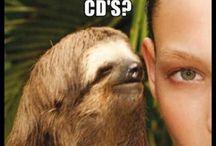 Oooh Sloth / Rape sloth