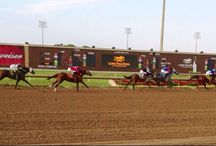 Fan Photos / by Lone Star Park at Grand Prairie