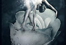 my fairy love