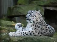 Wildlife / Villieläimet ovat kauniita, mutta valitettavan moni myös uhanalainen. WERAssa keskustellaan paljon uhanalaisuudesta. Erityistä huomiota herättää julkiselta foorumiltamme löytyvä lista uhanalaisista nisäkkäistä - lista on miljoona kertaa liian pitkä.