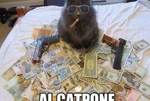 cats =^.^=