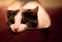 Cute n Cuddly / Well, sometimes!