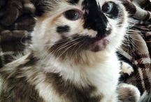 Katzenfell