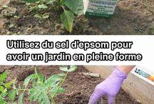 Astuces jardinage