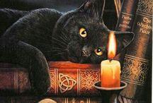 Kissat ja kirjat