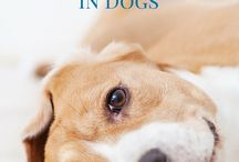 dogs and sicknesses