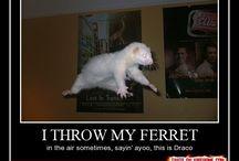 Harry Potter-humor / Funny