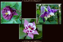 Tuinieren: lentebloeiers