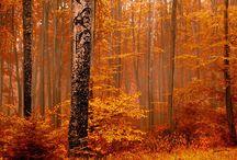 season I a u t u m n / autumn leaves under frozen souls / by arndthcrnr