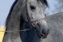 BÁBOLNA NEMZETI MÉNESBIRTOK / *http://www.sportlo.hu/hungarian/horses/   Lovas Lexikon **http://lovaslexikon.webnode.hu/lovas-lexikon/lofajtak/ ***  Lovaglás a pályán | Egészség |Jogszabályi háttér | Fajtalexikon