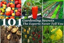 101 Gardening Secrets