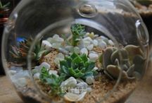 succulents ideas