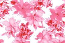 Floral Print | Pink / Floral Print | Pink