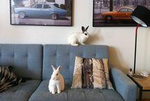 bunnies! / by Heidi Hess