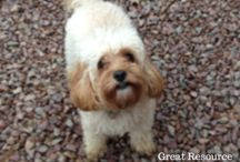 Dog Friendly Holiday Lets / Ideas, resources and great holiday lets who do pet-friendly brilliantly!