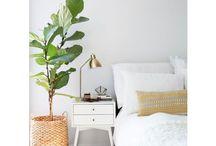 Livingroom greens