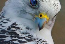 Beautiful Animals / Pics of beautiful animals
