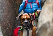Backpacking Dogs