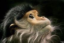 Inspiration in Nature - Mammals