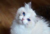 kattfoton