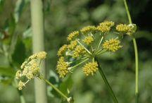 Növényvédelem, gyomírtás
