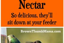 Feeding Birds / What too feed back yard birds