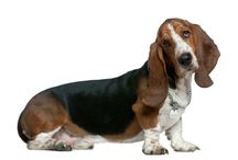 {Basset Hounds} / by Heather Smith