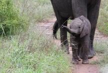 Babies of Kruger