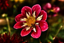 Herbst  Blume
