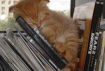 katzen cats . / 'I think I tah a Puddy Tat' (Tweety)