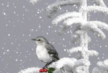 Christmas photos / Christmas climate with photos