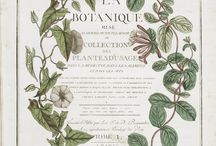 Botanical Board for Sarah / by Seahorse Bend Press