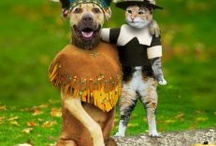 Animals dressed up / by Bailey Brannon
