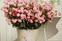 Cute flower arangments / by Karolyn Burke