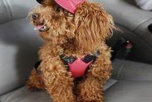 Dog Hats