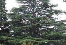Singular Trees
