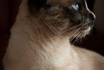 Koty do zjedzenia (2) / o kotach