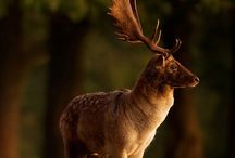 Animals - Horned / by Kimberly Wies