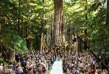 ЭКО свадьбы