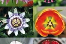 Geometry of Flowers