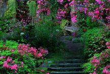 Garden / by Debbie Rooney