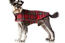 Hund kläder