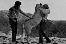 Animals / by Annette Cheppudira