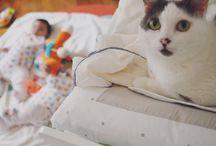 Cat & Baby