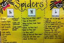 Spiders / by Beth Cook