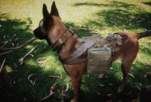 Animals & tactical gear